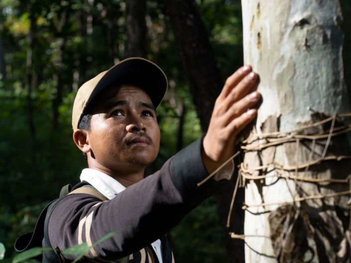 Local communities move to the frontline of forest protection in Cambodia